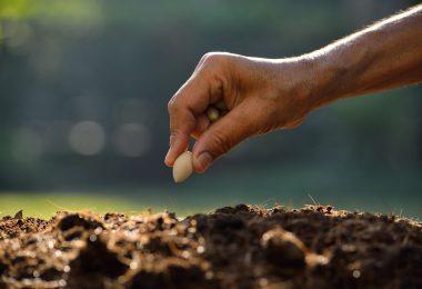 Agricultor a plantar semente