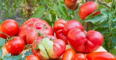 Tomates deformes: las frutas y verduras feas son la última revolución del mercado alimentario