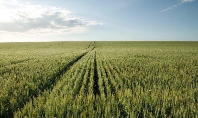 herbicidas selectivos para el cereal