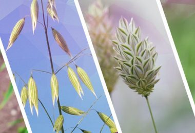 mejor herbicida para quitar las malas hierbas
