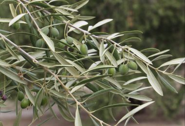 Tratamiento del olivar: una formulación de calidad