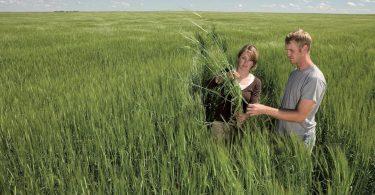 Prevención y manejo de la resistencia a los herbicidas