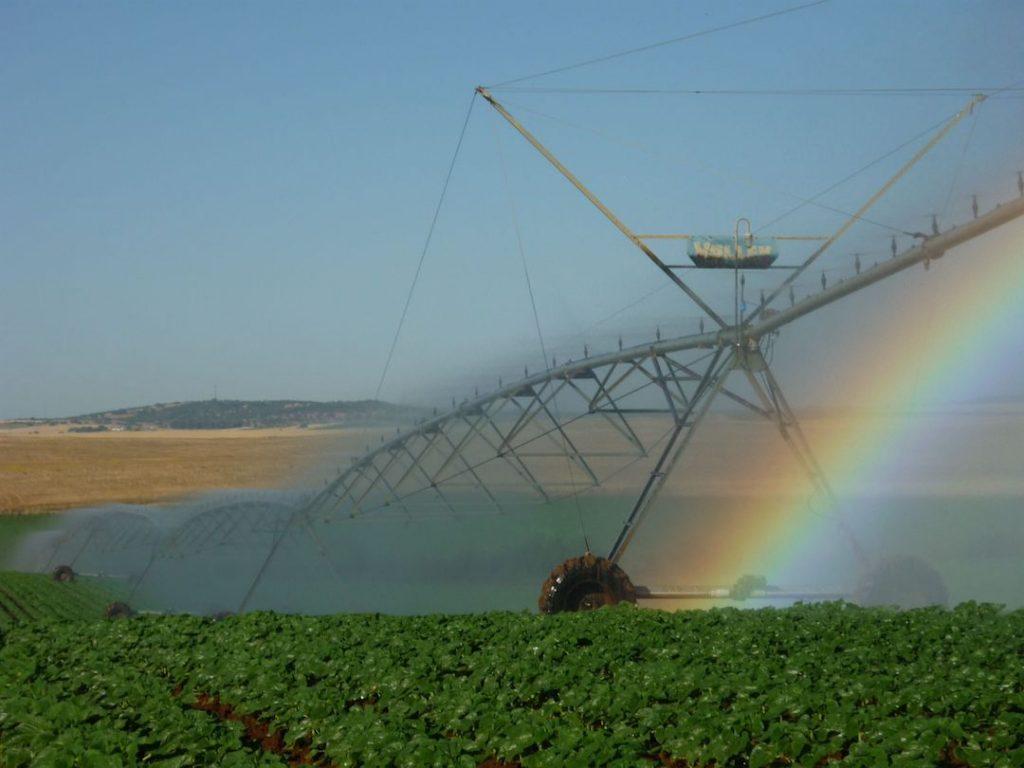 Cultivo de girasol en regadío y control de malas hierbas