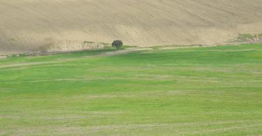 La importancia del suelo para el futuro de la agricultura