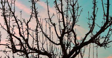 tratamiento de los árboles de frutas en invierno 1