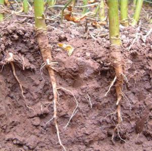 El suelo en la agricultura y las raíces