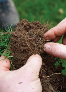 El suelo en la agricultura y su biodiversidad