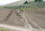 cultivo del olivar sostenibilidad