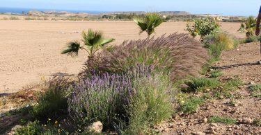 Biodiversidad en el Mar Menor