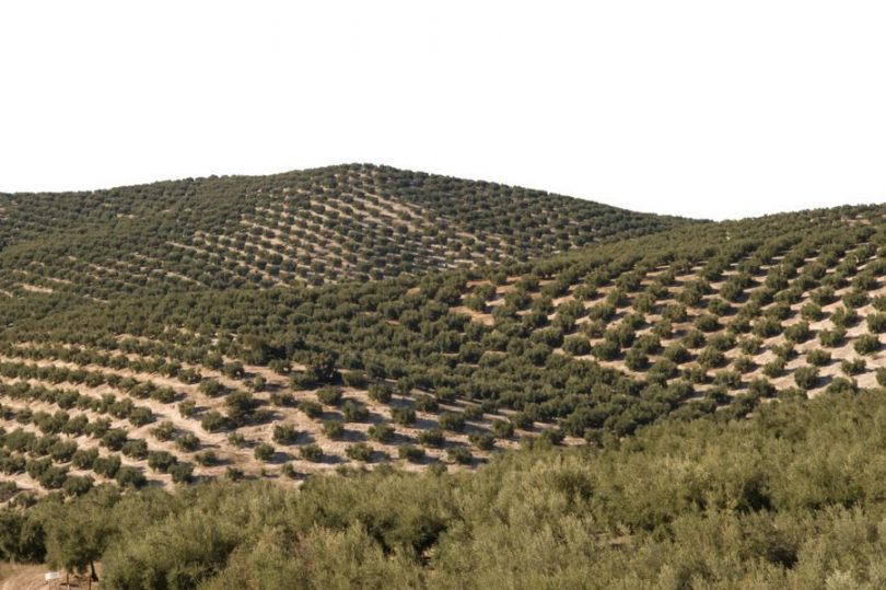 herbicida olivar