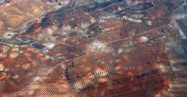 Sistemas de producción del olivar