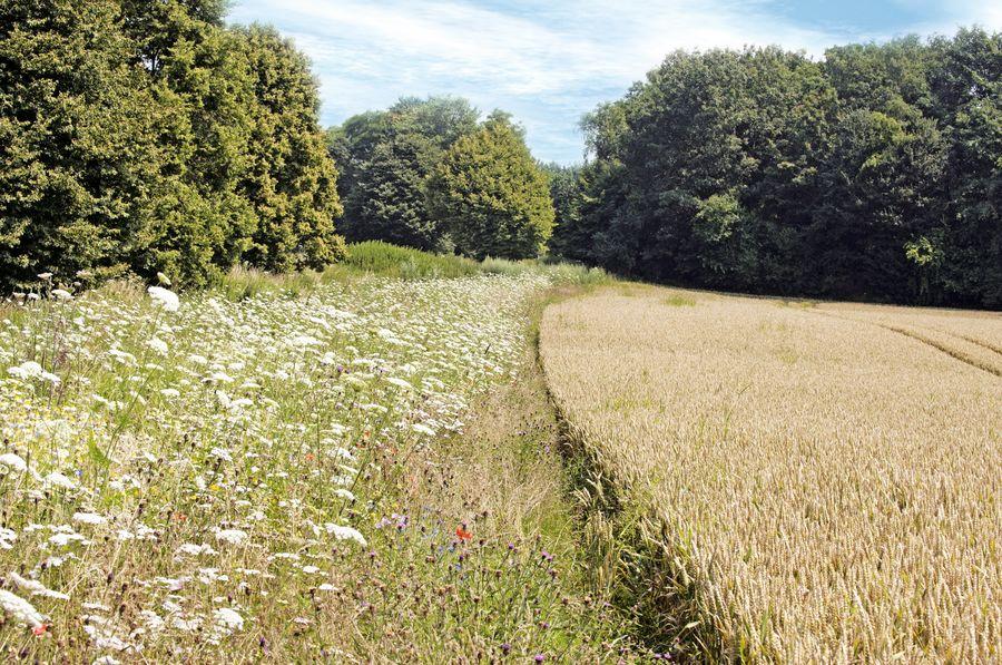 Biodiversidad y agricultura, un binomio necesario para aumentar la productividad agrícola