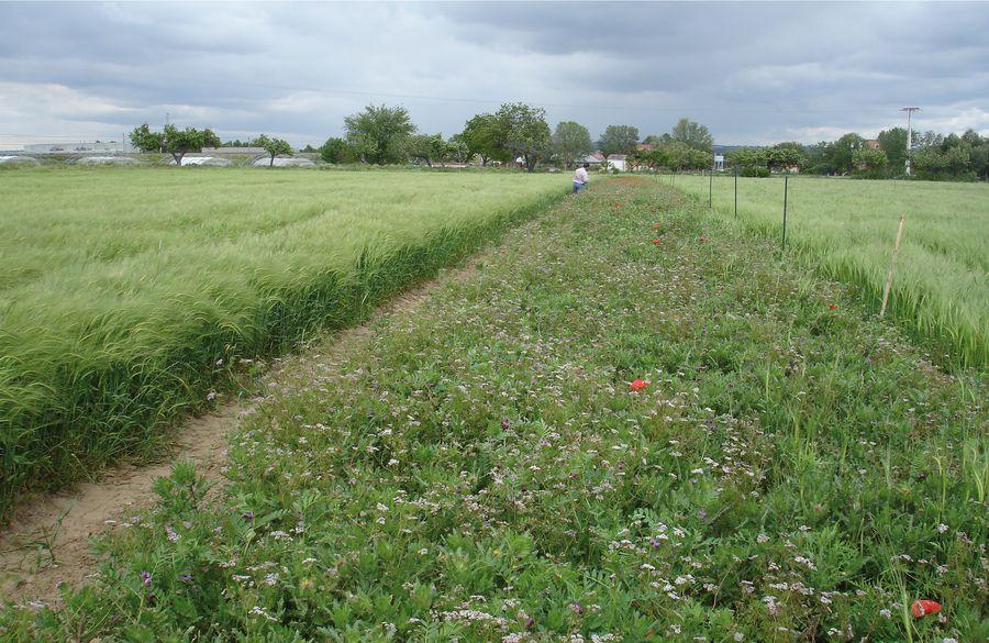Operación Polinizador, aumentando las poblaciones de insectos en entornos agrarios