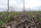 El papel de la Agricultura de Conservación en la mitigación del cambio climático