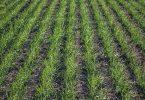 La Agricultura de Conservación como estrategia para la adaptación al cambio climático