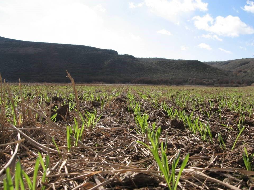 Soil Farming Project, un proyecto internacional promovido por Syngenta