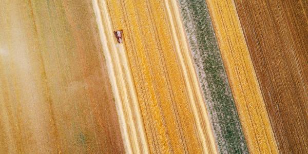 La biodiversidad genera una serie de servicios ecosistémicos que son básicos para la competitividad agrícola